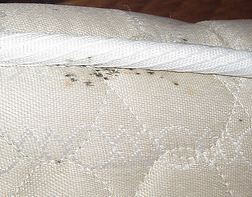 bed bug control Yucaipa